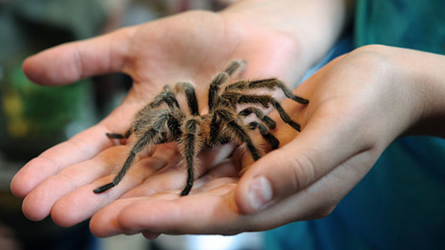 Quick 6 Reasons to Love Spiders